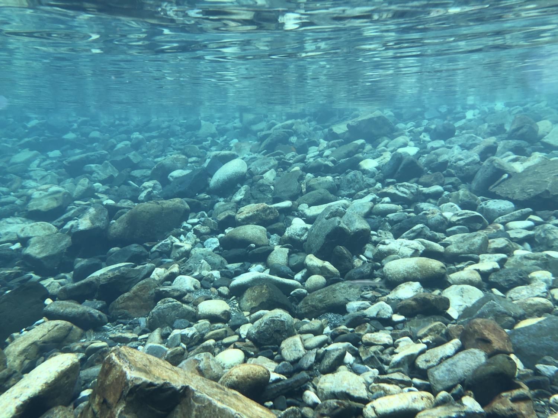和田川の水中